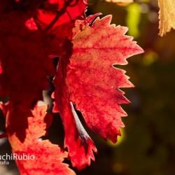 Chuchi Rubio Fotografo en Logroño, Rioja, Navarra, Álava